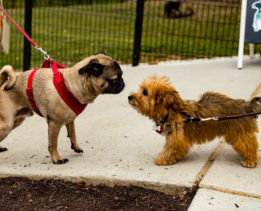 Best dog parks in the DMV