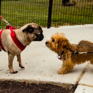 ellsworth dog park