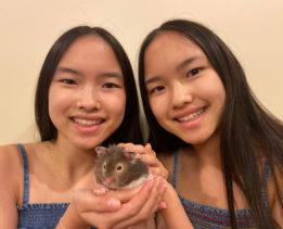 hamsters: misunderstood pets